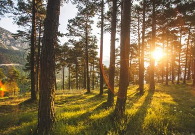 ¿Te imaginas un mundo sin bosques? – Naciones Unidas